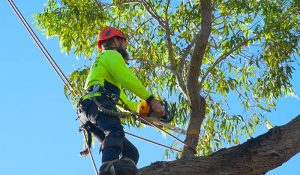 cost guide for tree removal